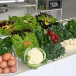organicos-sitio-cultivar_nova-friburgo